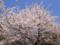[春][植物][桜]