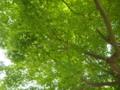 [庭園][三渓園]
