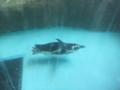 [2013ハイク忘年会][ハイクオフ][鳥][ペンギン]