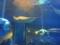 [2013ハイク忘年会][ハイクオフ][水族館]