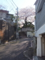 [階段][桜]