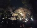 [六義園][桜]