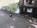 [庭園][鳥]