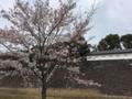 [桜][春]乾通り