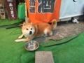 [動物][犬]