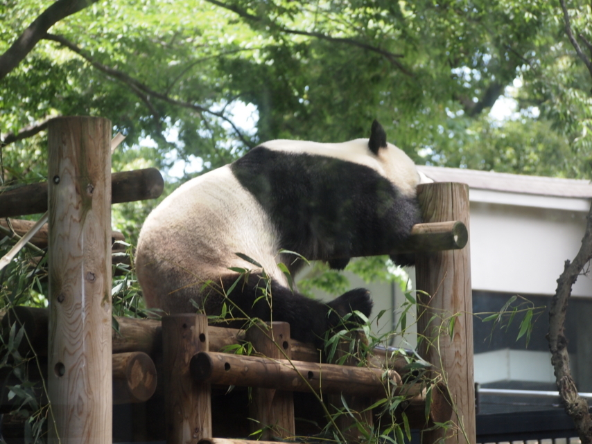 [動物][上野動物園][パンダ]