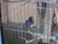 [上野動物園][鳥]