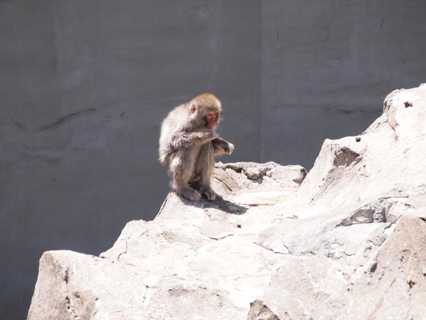 [動物][上野動物園]
