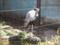 [鳥][上野動物園]