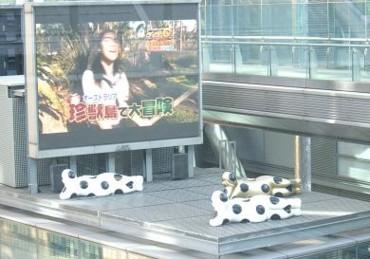 f:id:kenchi555:20100106211535j:image