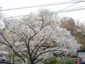 f:id:kenchi555:20110419073646j:image