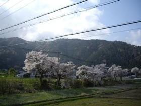 f:id:kenchi555:20110420074724j:image