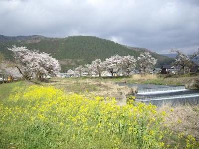 f:id:kenchi555:20110420074810j:image