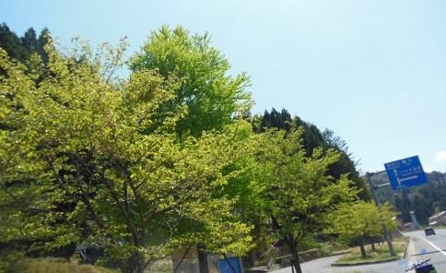 f:id:kenchi555:20130429091939j:image