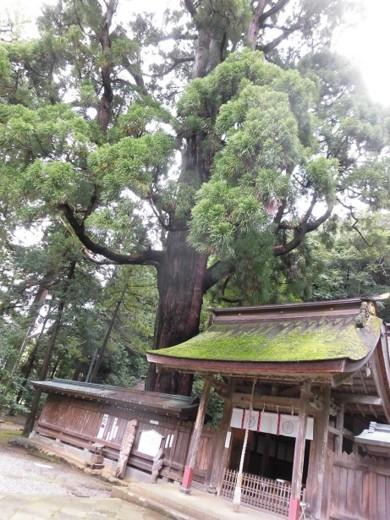 f:id:kenchi555:20161009095115j:image