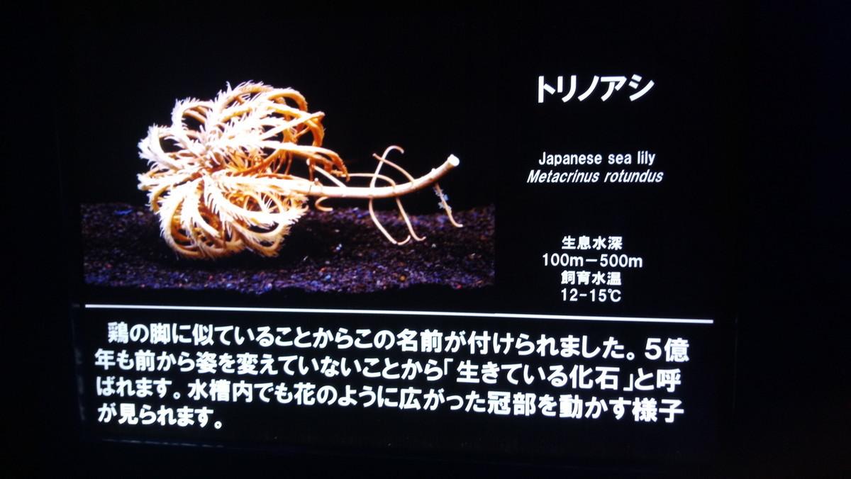f:id:kenchi555:20190719164654j:plain