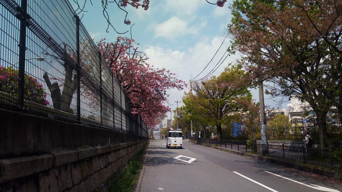 f:id:kenchi555:20200418211400j:plain