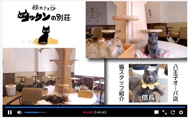 f:id:kenchi555:20200524205747j:plain