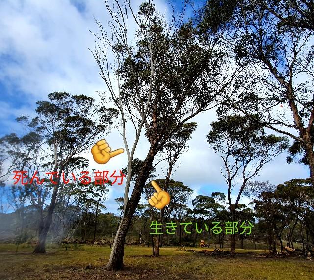 f:id:kengyonouka:20200824131708j:image