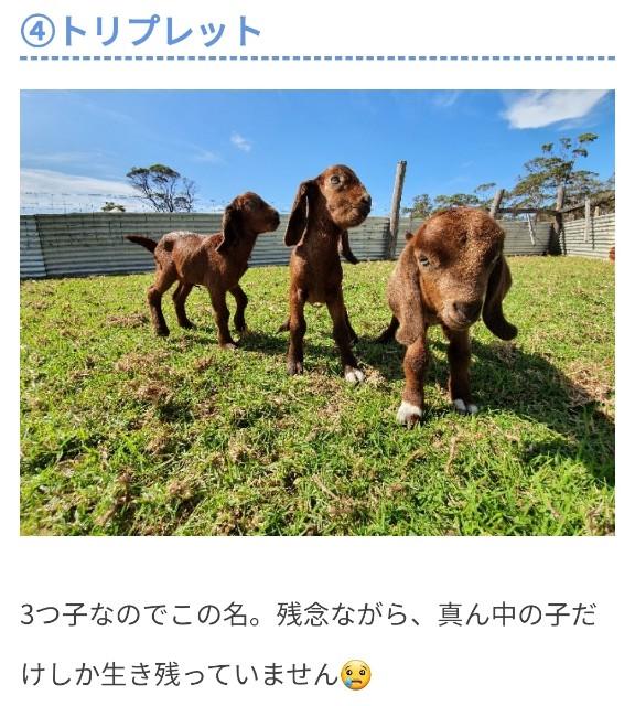 f:id:kengyonouka:20210420105854j:image