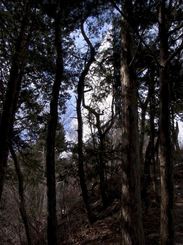 f:id:kenji-iwasaki:20120204123711j:image:w360