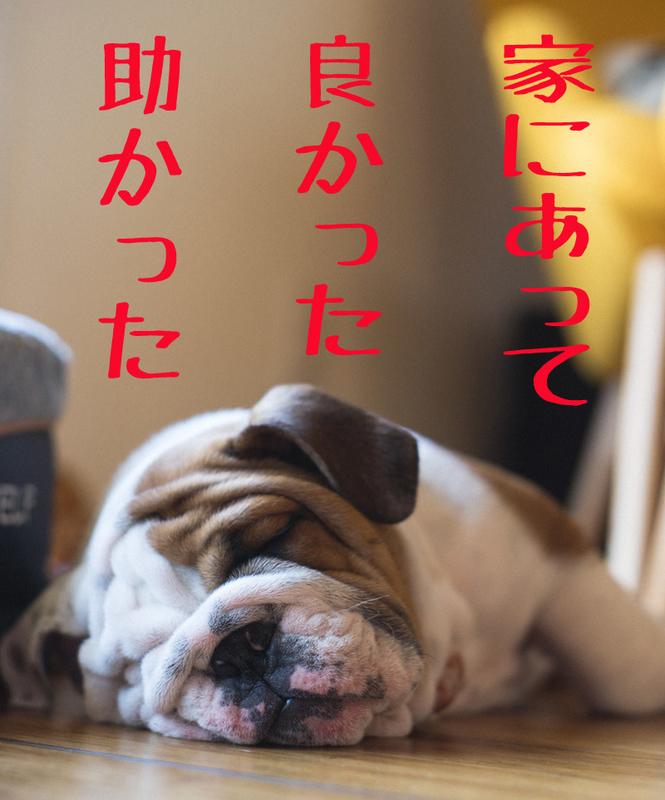 f:id:kenji_2387:20190202111348j:plain