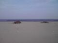 荒浜地区の被害状況を視察(その4)
