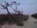 荒浜地区の被害状況を視察(その6)