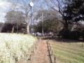 早春の一之江橋付近