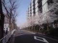 桜2018東陽町