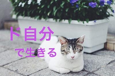 f:id:kenkohuntermio:20171013042529j:plain
