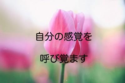 f:id:kenkohuntermio:20171025160227j:plain