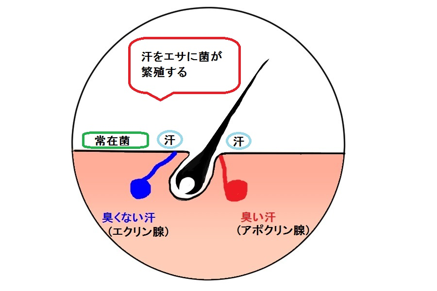 f:id:kenkou145:20151016150633j:plain