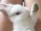 私のウサギ