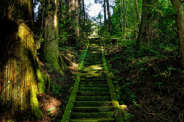 森の中にある階段