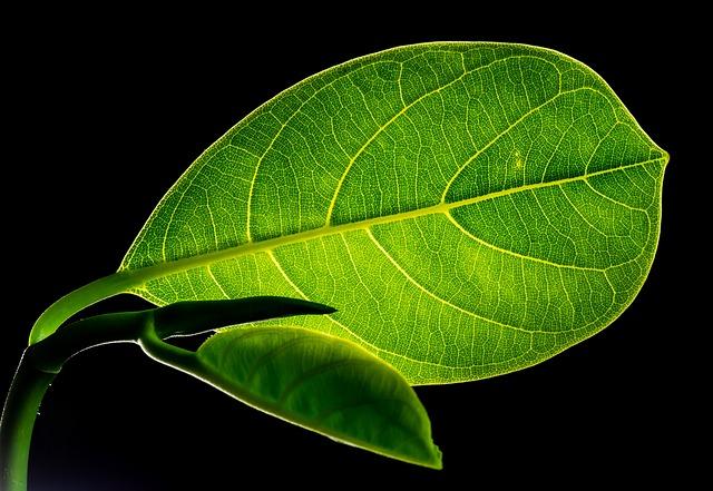 黒い背景に緑の葉