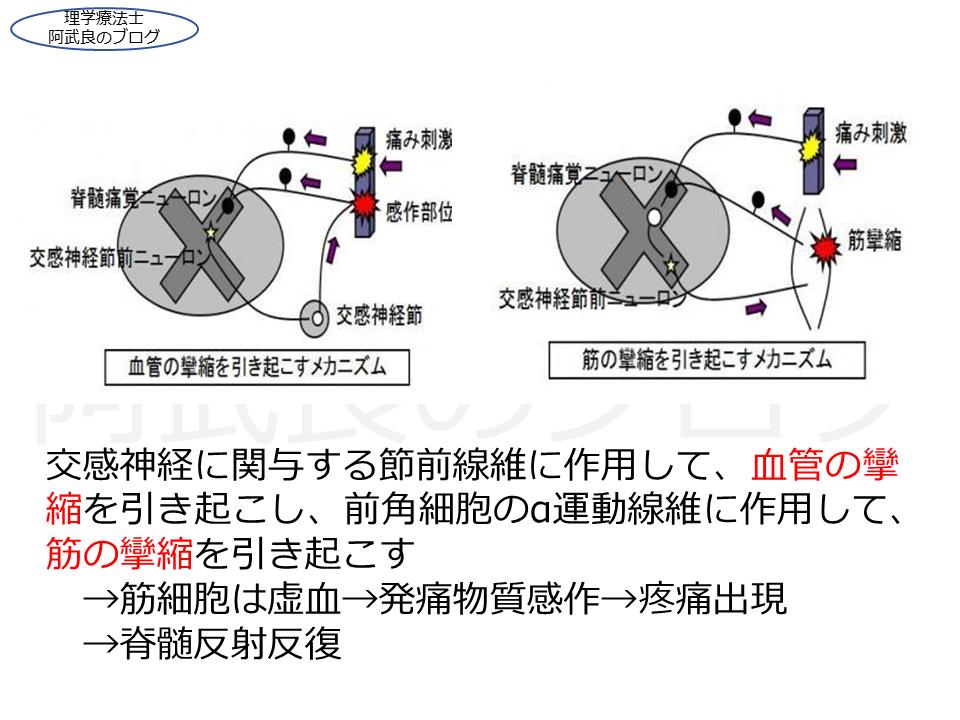 f:id:kenkouPT:20210221002701p:plain