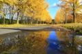 『京都新聞写真コンテスト 黄金の並木道』