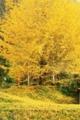 京都新聞写真コンテスト  黄金の世界