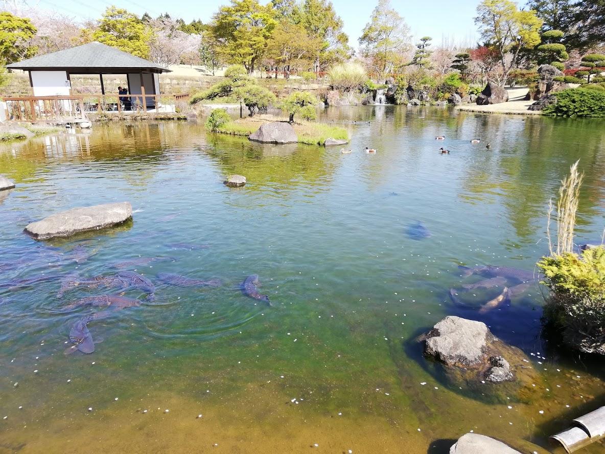 牛久大仏の池