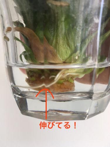 f:id:kennobuyoshi:20180522095941j:plain