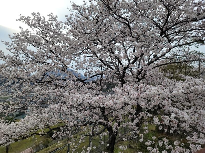 f:id:kensan_tako:20210327210551j:plain