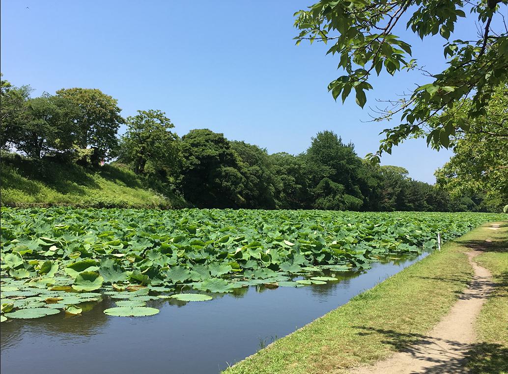 福岡市 舞鶴公園の堀