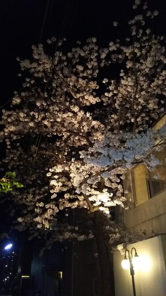 f:id:kensuiohtaku:20170408055818j:plain