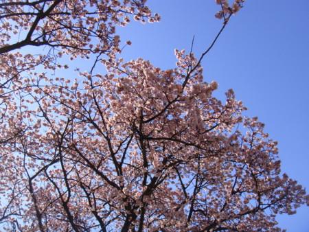 f:id:kensuke_jp:20100207093159j:image