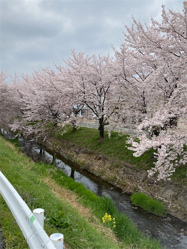 f:id:kenta_bonjin:20210402112611j:image