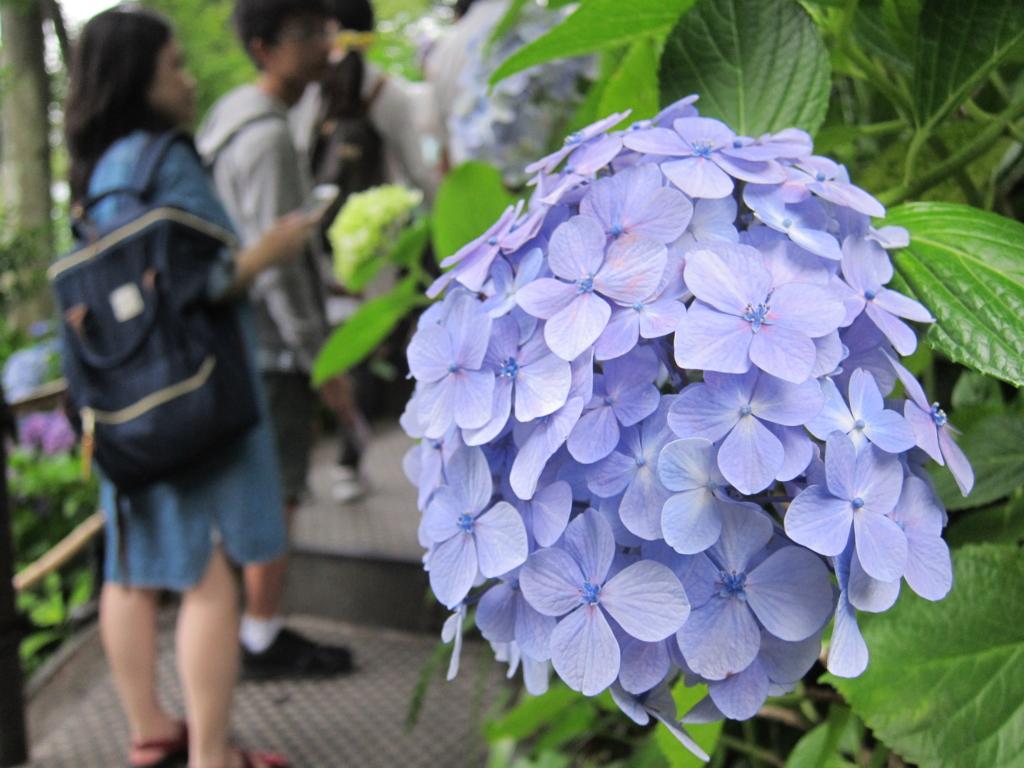 f:id:kentaro-takano:20160704174912j:plain