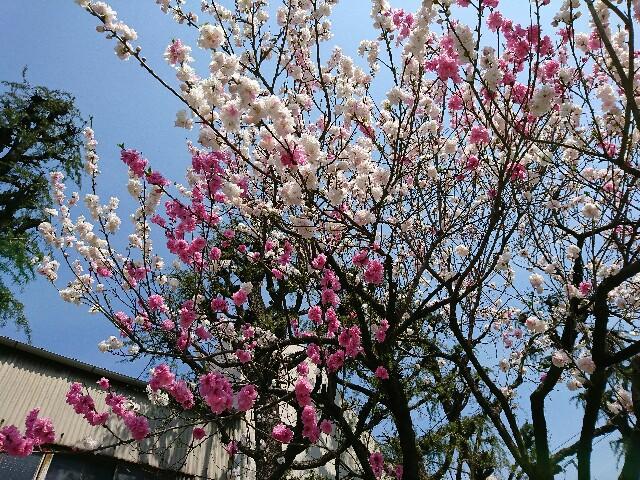 f:id:kentaro-takano:20170406112002j:image
