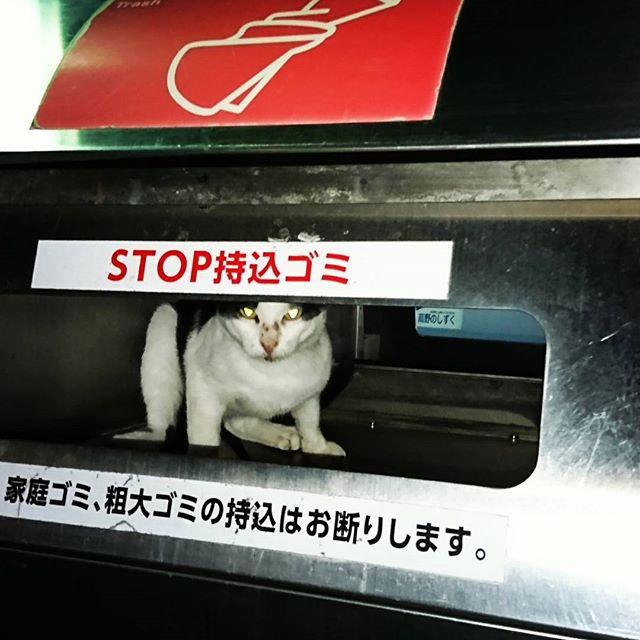 f:id:kentaro-takano:20180105180705j:plain