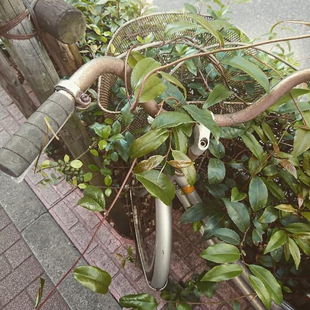 f:id:kentaro-takano:20180711222707j:image